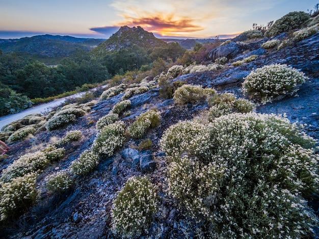 Wunderschöne landschaft mit vielen büschen im naturpark montesinho