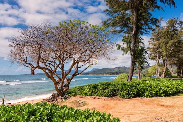 Wunderschöne landschaft mit vielen tropischen grünpflanzen, umgeben von hohen bergen