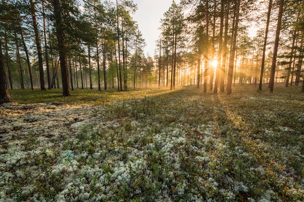 Wunderschöne landschaft sibiriens