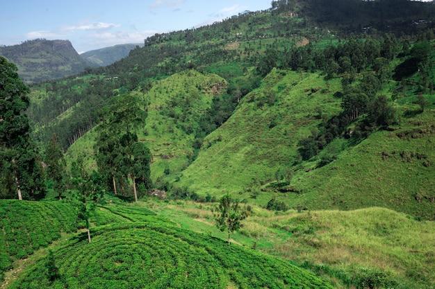 Wunderschöne landschaft von sri lanka. schöner blauer himmel und berge in ceylon