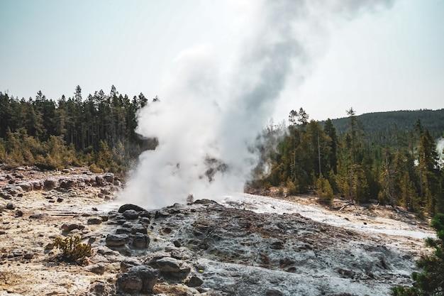Wunderschöner nebel, der aus dem boden in der nähe der bäume aufsteigt, die im yellowstone-nationalpark, usa, gefangen wurden?
