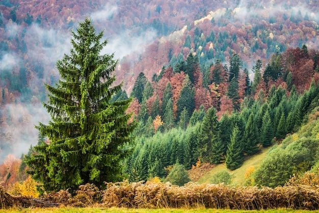 Wunderschöner nebliger hügel mit bunten nadelbäumen