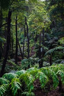 Wunderschöner tropischer regenwald in der nähe der heißen quellen