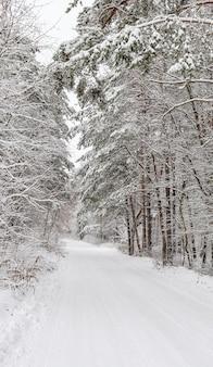 Wunderschöner winterwald mit verschneiten bäumen und einem weißen straßenmärchen