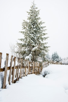 Wunderschönes panorama von zäunen, die unter hohen schneeverwehungen vor dem hintergrund hoher schneebedeckter tannen im nebel hervorschauen.