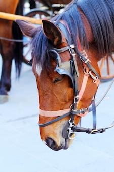 Wunderschönes pferd