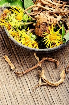 Wurzel und blüten von inula