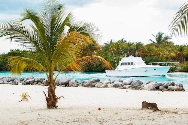 Yacht und palme