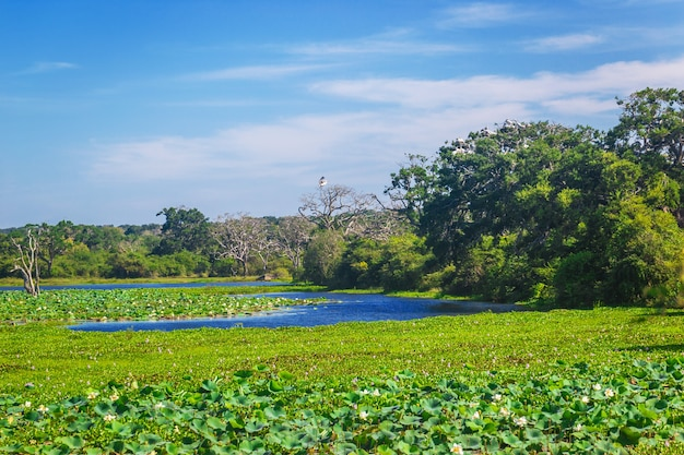 Yala nationalpark, sri lanka, asien. see und alte bäume.