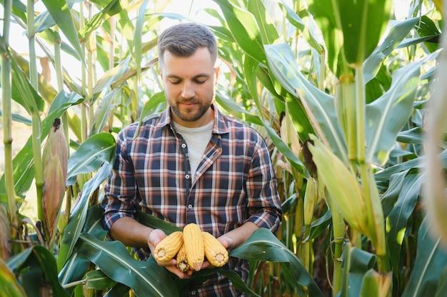 Yong gutaussehender agronom im maisfeld und untersucht getreide vor der ernte. agrobusiness-konzept. agraringenieur, der in einem maisfeld steht.