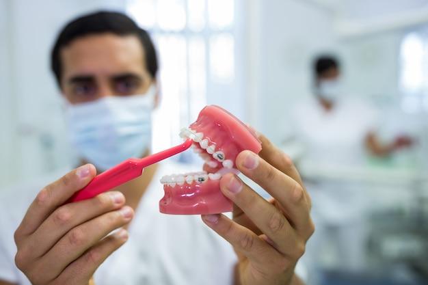 Zahnarzt, der zahnkiefermodell mit einer zahnbürste reinigt