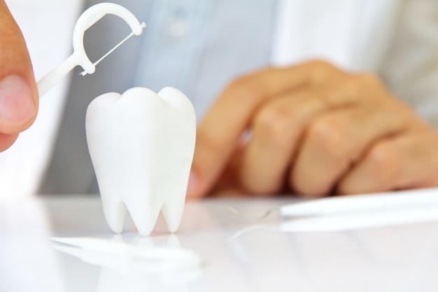 Zahnarzt, der zahnseide mit molar hält