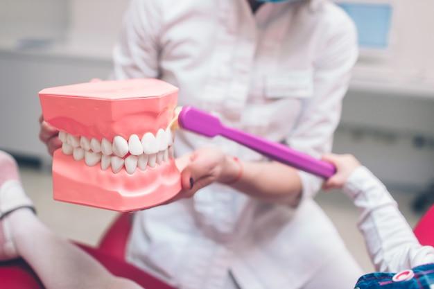 Zahnarzt mit den handschuhen, die auf einem kiefermodell zeigen, wie man die zähne mit zahnbürste richtig und recht säubert