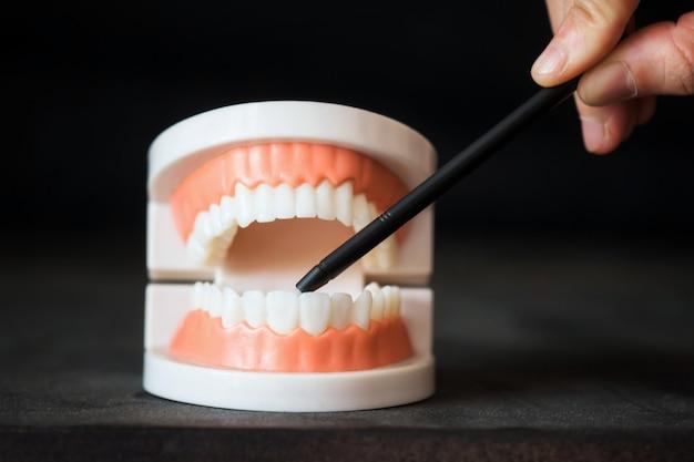 Zahnarzt zeigt auf den vorderzahn. zahnärztliches wissen