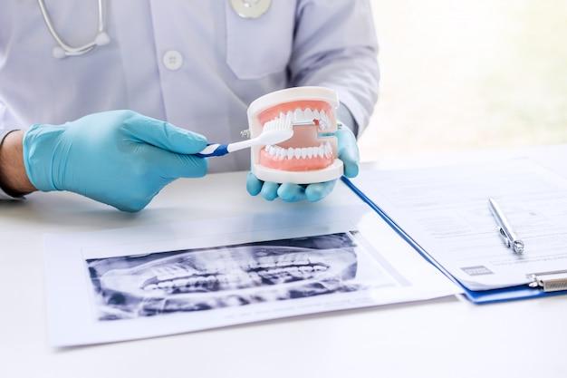 Zahnarzthandholding des kiefermodells der zähne, säubernd zahnmedizinisch mit zahnbürste