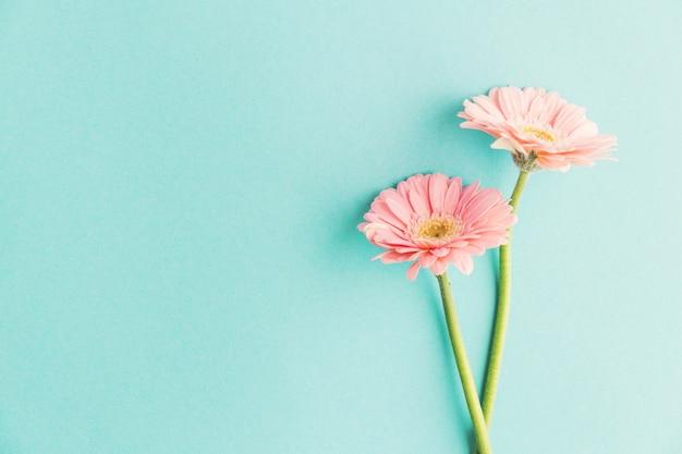 Zarte frühlingsblumen auf blau