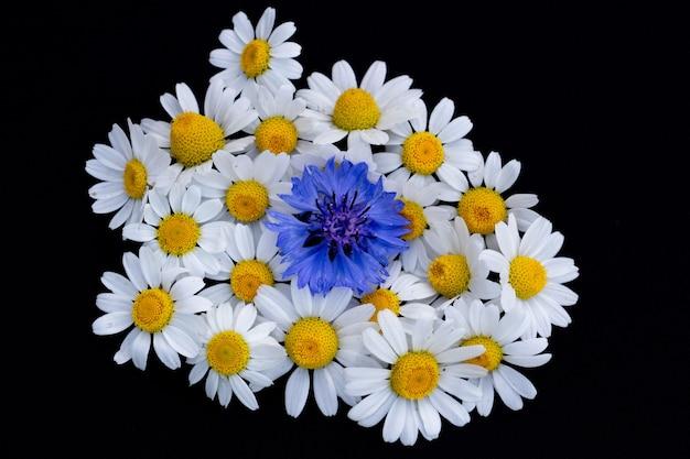 Zarte gänseblümchen und kornblume auf schwarzem hintergrund, schöner blumenhintergrund, kopienraum