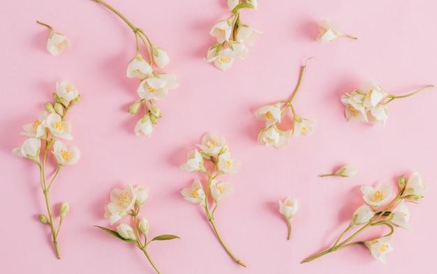 Zarte jasminblüten auf einem rosa hintergrund
