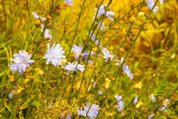 Zarte lila wildblumen auf einer sommerwiese