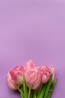 Zarte rosa tulpe auf pastellviolettem hintergrund. grußkarte zum frauentag. flach liegen. speicherplatz kopieren. platz für text. konzept des internationalen frauentags, des muttertags, des osters. valentinstag lieben tag