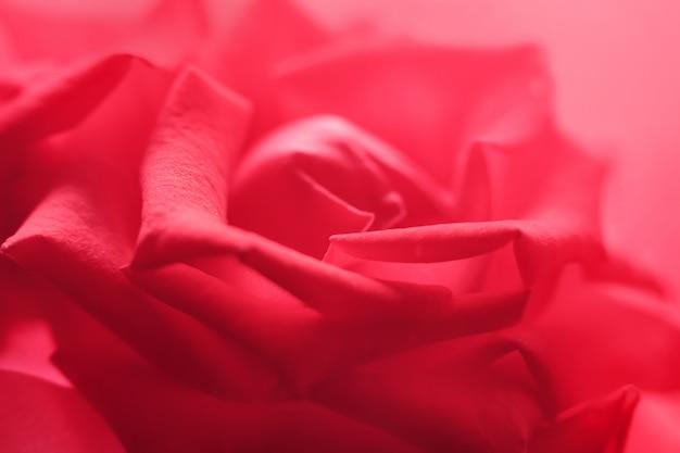 Zarte rose makro hintergrund.