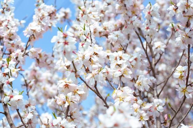 Zarte schöne weiße blüten an den zweigen gegen den himmel