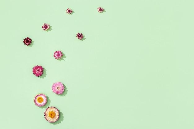 Zarte trockene blüten, blätter und bunte blüten schließen das herbarium. natürlicher blumiger hintergrund mit kopienraum, pastellfarben, abstrakt in der natur