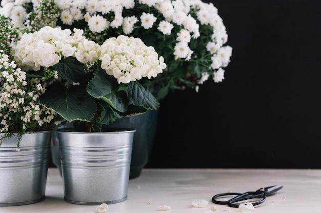 Zarte weiße blumen mit schere über den tisch