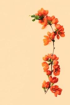 Zarter frühlingszweig mit heller quitte blüht nahaufnahme auf pastellfarbenem hintergrund mit platz für design
