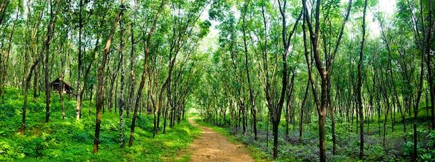 Zauberhafte waldstraße in einer gummibaumplantage, kerela, indien.