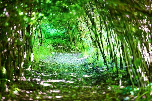 Zauberwald mit weg zum licht durch einen dunklen baumtunnel