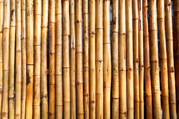 Zaun bambus textur - bambus hintergrund