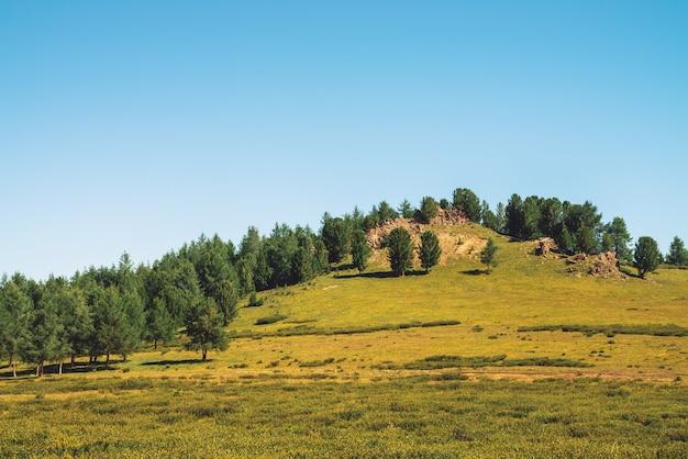 Zedern wachsen auf hügel nahe felsigem stein am sonnigen tag. erstaunliche nadelbäume unter blauem himmel. reiche vegetation des hochlands. unvorstellbare berglandschaft.
