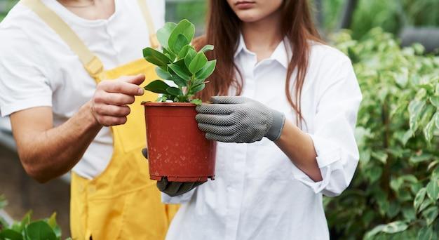 Zeigt den richtigen weg, dies zu tun. ein paar nette gartenarbeiter in arbeitskleidung, die sich um die pflanze im topf im gewächshaus kümmern.