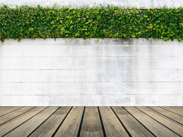 Zementwand und grünes blatt für hintergrund