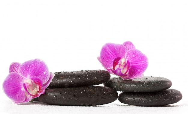 Zen stein und orchidee. spa-konzept