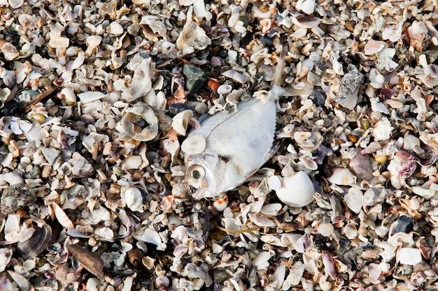 Zersetzung toter fischkadaver an land gespült mit überwiegend übrig gebliebenen gräten