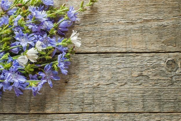 Zichorienblumen auf rustikalem hölzernem hintergrund. heilpflanze cichorii