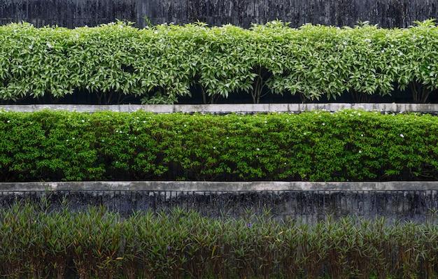Zierpflanzen auf der terrasse, moderne und einfache komposition des hausgartens