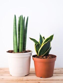 Zierpflanzen in den töpfen baumhausdekoration auf bretterboden.