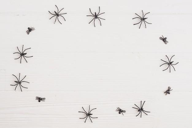 Zierspinnen im kreis angeordnet