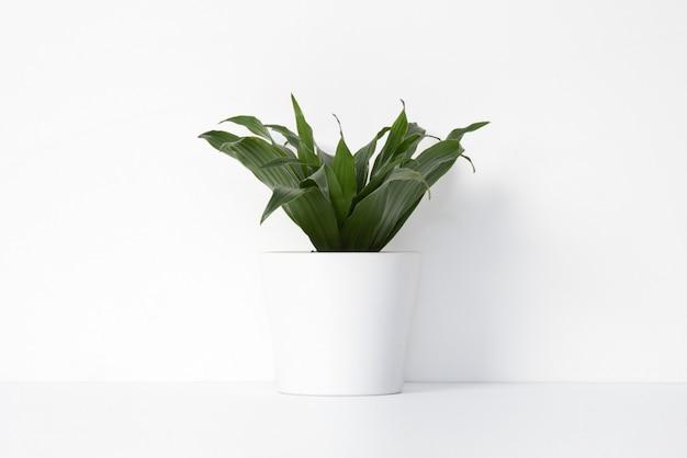 Zimmerpflanze im weißen topflappen