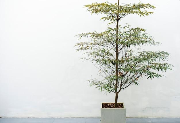 Zimmerpflanze in einem weißen topf