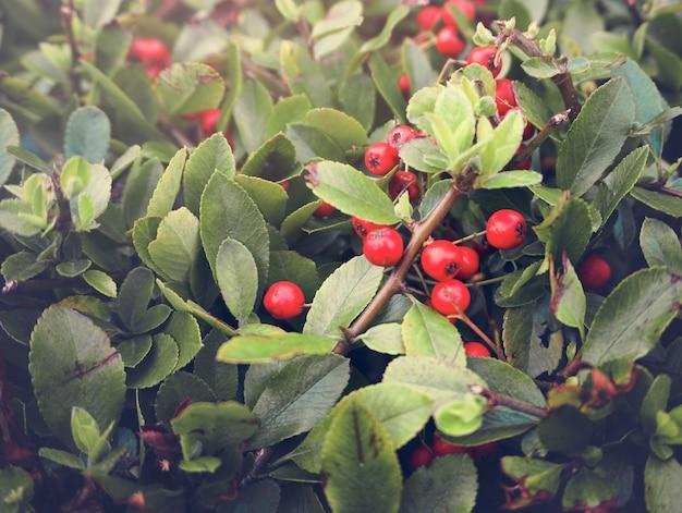 Zimmerpflanze natural floral foliage dekoration
