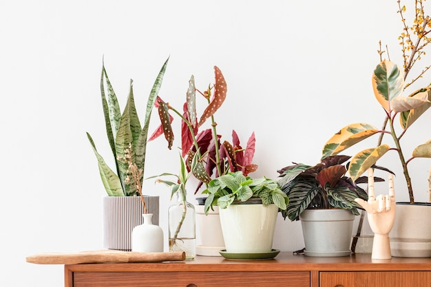 Zimmerpflanzen auf einem holzschrank