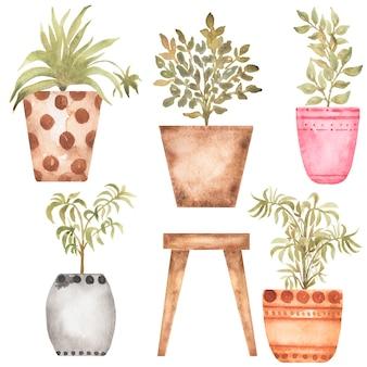 Zimmerpflanzen clipart, aquarell handgezeichnete hausgartenillustration, hausblumen-clip-art-set, topfblumen, kartenherstellung, logo-design, scrapbooking