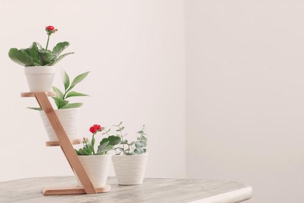Zimmerpflanzen gegen weiße wand auf holztisch