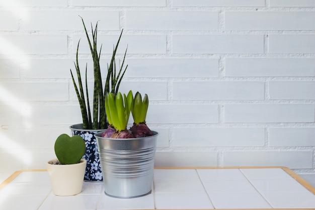 Zimmerpflanzen im haus. minimalismus dekokonzept. platz für texttext