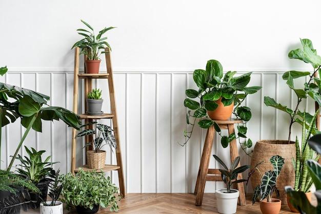 Zimmerpflanzen im zimmer in einer ecke auf einem parkettboden