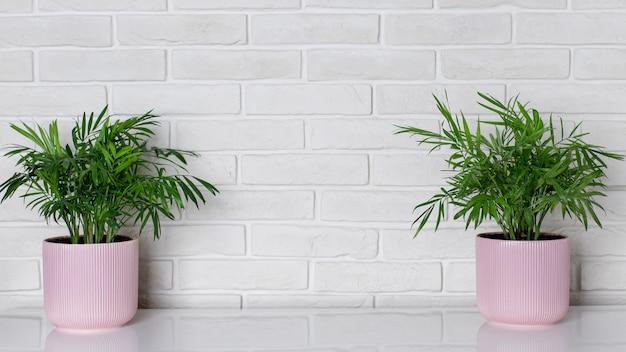 Zimmerpflanzen in rosa blumentöpfen in einem modernen innenraum gegen eine weiße backsteinmauer. heimatblumenzucht.